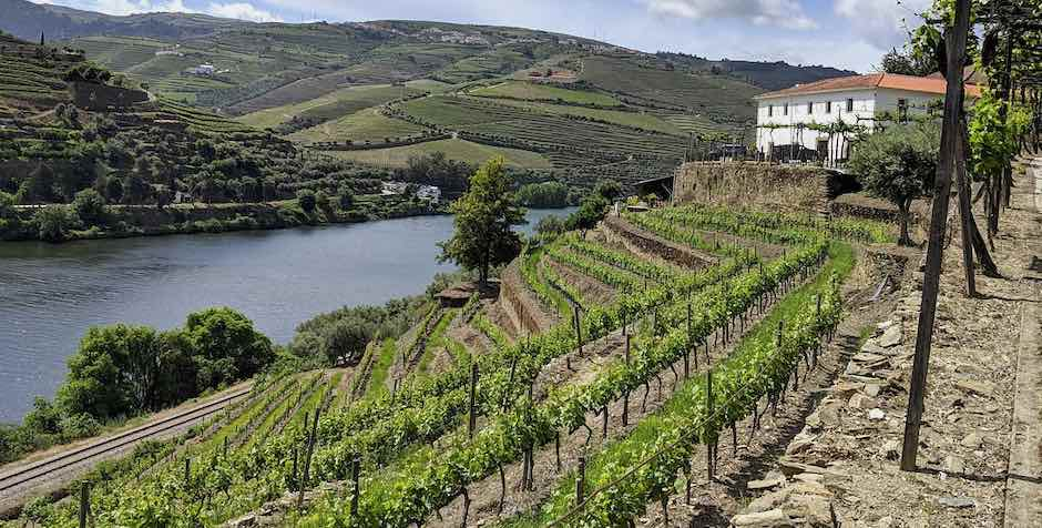 Monocasta, Porto Douro Valley Wine Tour, Landscape view