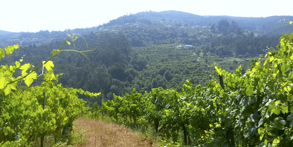 Vineyard, Vinho Verde Full Day Tour